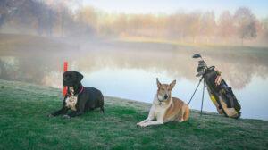 golfhunde